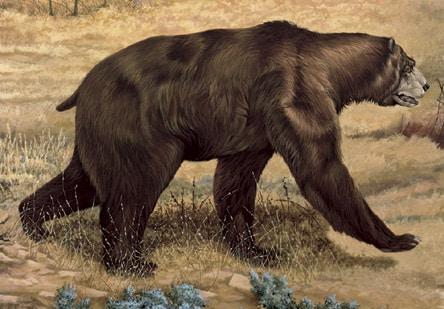 oso prehistórico