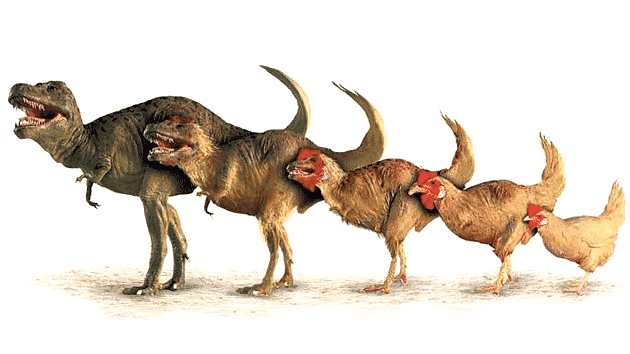mamiferos1