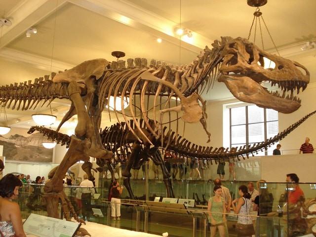 Resultado de imagen para fosiles dinosaurios