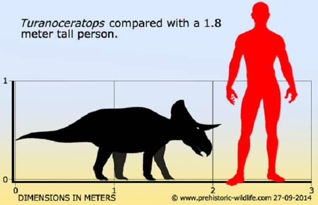 dimension turanoceratops