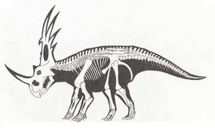 Descripción del Styracorsaurus