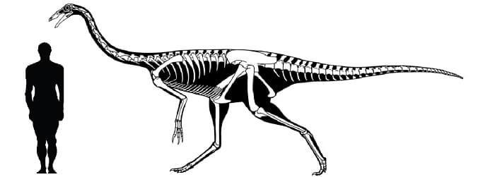 Resultado de imagen de gallimimus skeleton