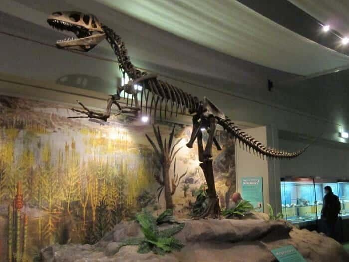 Descubrimiento del Megalosaurus