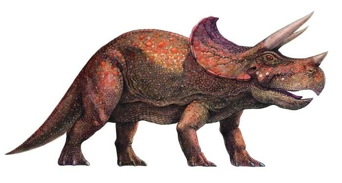 Dibujo de un Triceratops