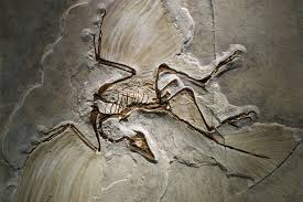 fosil archaeopteryx