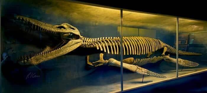 Reconstrucción de Kronosaurus