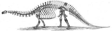 esqueleto-brontosaurus