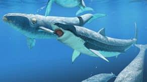 Megalodón atacando una ballena