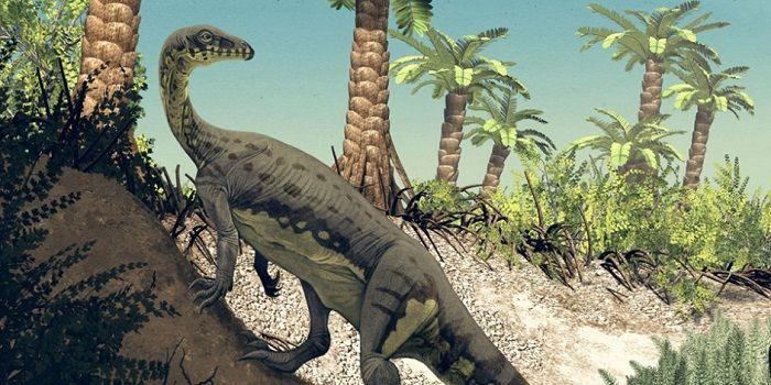 anchisaurus – dinosaurio herbivoro