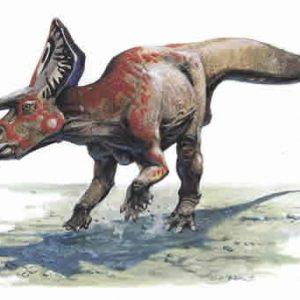 zuniceratops – dinosaurio herbivoro