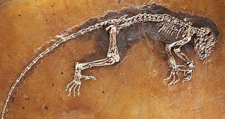paleobiologia realizada a unos restos encontrados