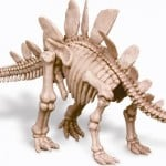 esqueletotriceratopsreproducción de esqueleto del estegosaurus