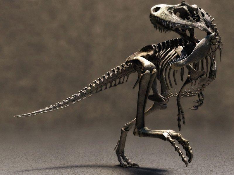 Esqueletos de Dinosaurios [contenido científico]
