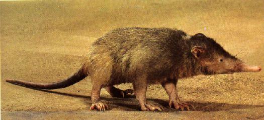 mamiferos3
