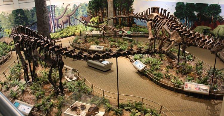 museo-dinos