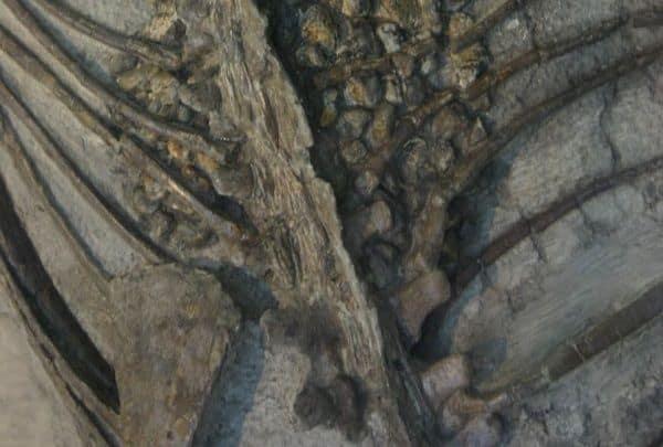 gastrolitos-sauropodos
