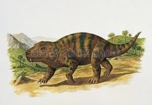 Cynognathus