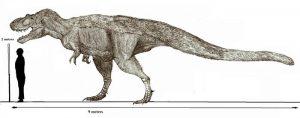 Descripción del Daspletosaurus