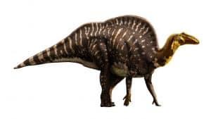 Descripción del Ouranosaurus