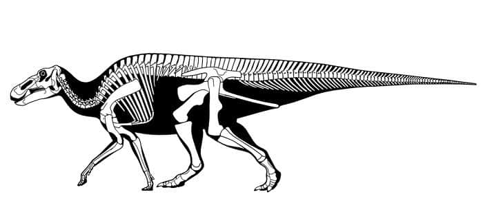 Características del Anatotitan