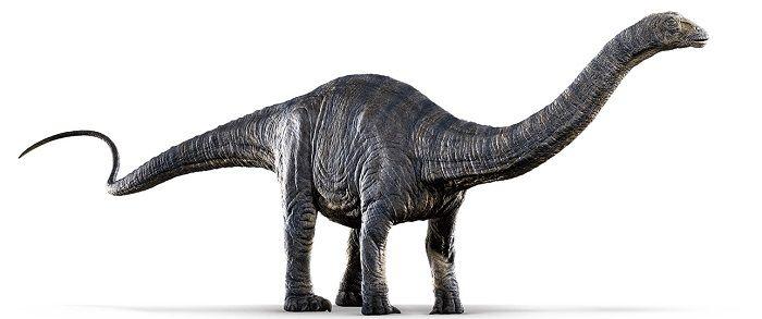 Descripción del Apatosaurus