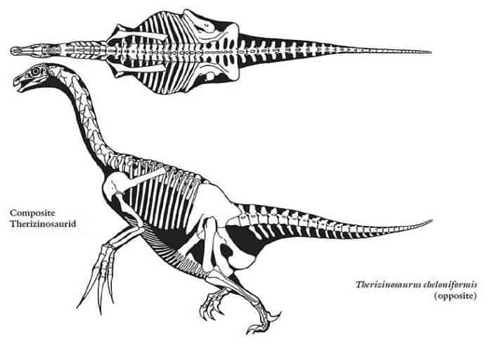 Descripción sobre Therizinosaurus