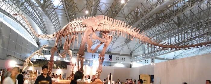 Reconstrucción de un Mamenchisaurus