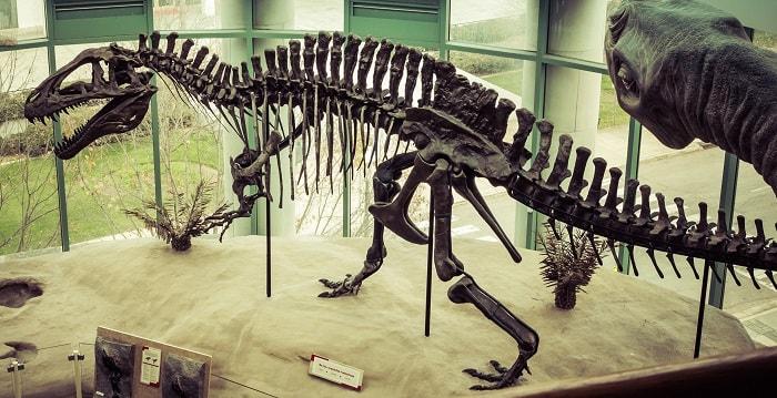 Restos de Acrocanthosaurus situados en el Museo de Ciencia Natural