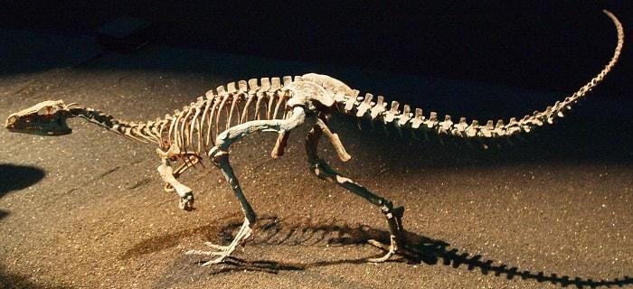 Representación de un Eoraptor