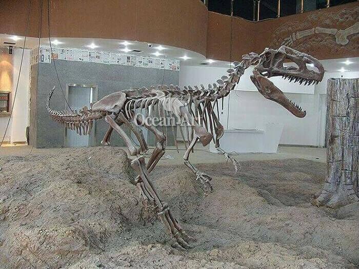 Restos del Monolophosaurus Jiangi