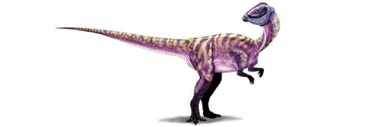 micropachycephalosaurus dinosaurios más pequeños
