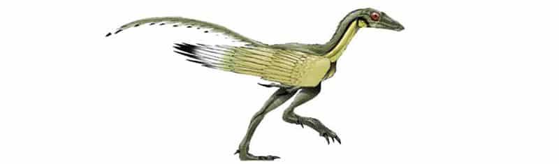 protoavis otro pequeño dinosaurio