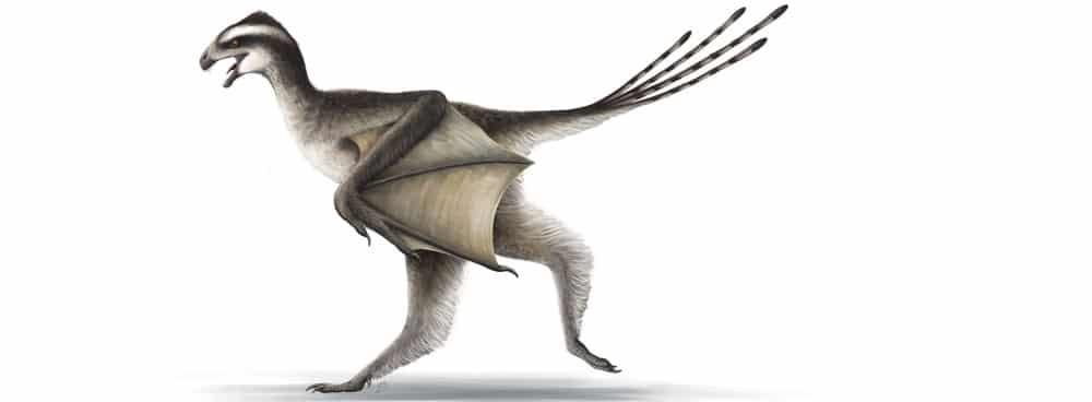 scansiopterix los dinosaurios más pequeños