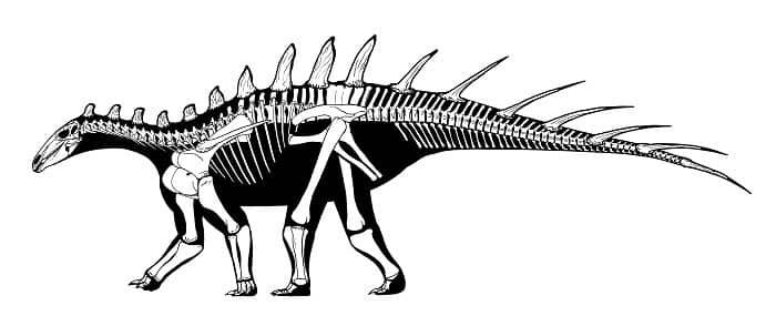 Descripción del Kentrosaurus