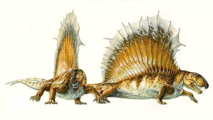 comportamient-dimetrodon