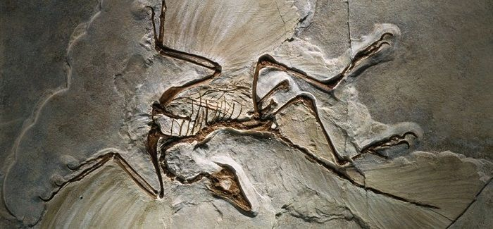 Descubrimiento del Archaeopteryx