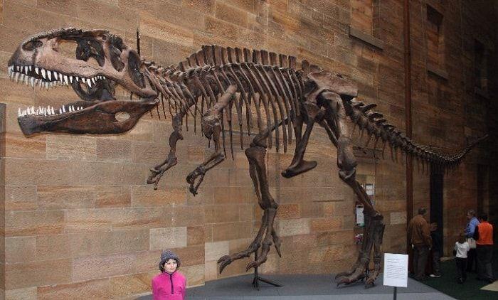 Descubrimiento del Giganotosaurus