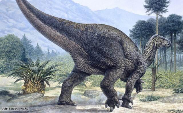 Hábitat natural del Iguanodon
