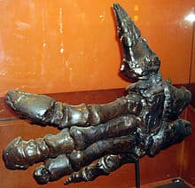 iguanodon - dedo pulgar de la mano