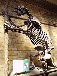 Fósiles encontrados de un Megatherium