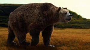 oso cara corta