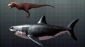 Comparativa-de-un-megalodón-y-un-T-Rex
