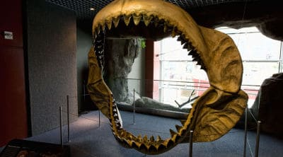 Fósil de una mandíbula de megaoldón
