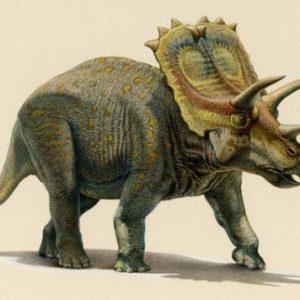 Anchiceratops – dinosaurio herbivoro