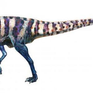 Australovenator – dinosaurio carnívoro