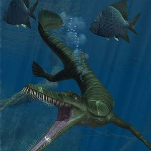 Mesosaurus – dinosaurio marino