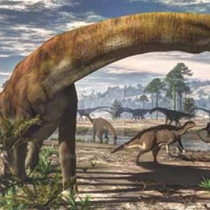 camarasaurus – dinosaurio herbivoro