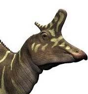cresta - Lambeosaurus