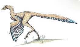 Archaeopteryx - ave prehistorica