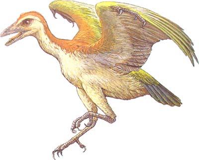 Neuquenornis - ave prehistorica